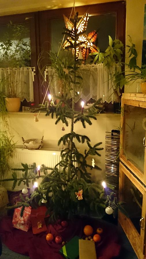 Weihnachtsbaum