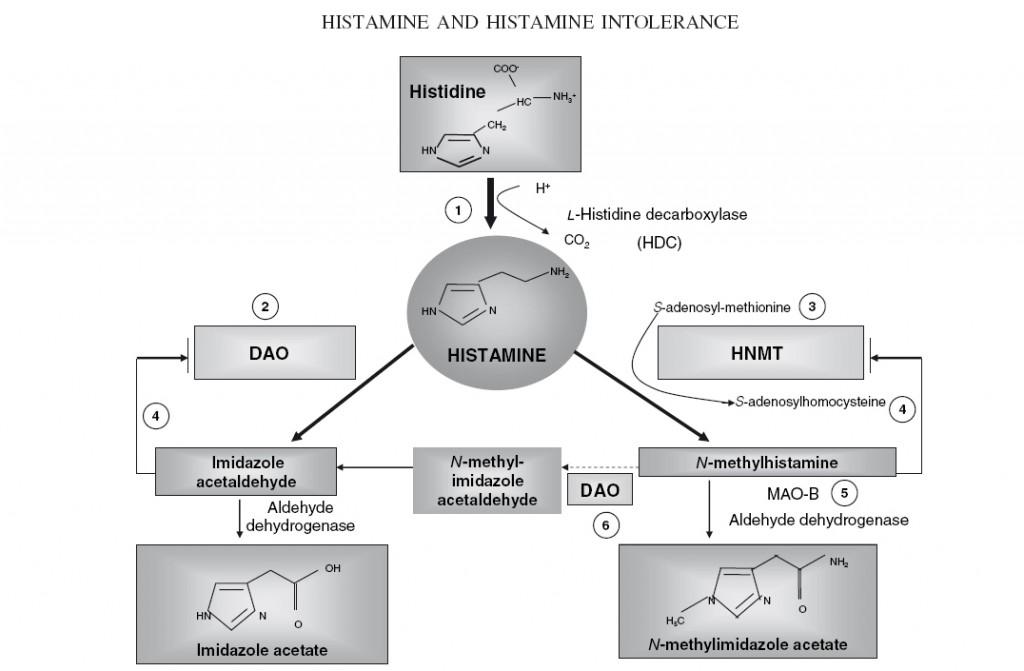 histaminabbaumaintz